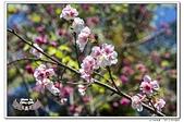 台北植物園隨拍10703:_MG_1013.jpg