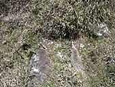 2009雪山主&東峰&翠池:IMG_4930.jpg