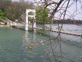 833澄清湖櫻花祭:P3183010.JPG