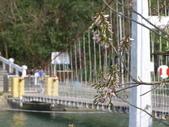 833澄清湖櫻花祭:P3183012.JPG