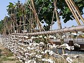 990327~28台南二日遊:牡蠣殼