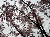 990304陽明山花季:P3043904.JPG