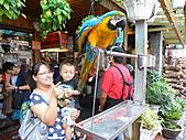 991008宜蘭頭城上山下海篇:店外養的鸚鵡~嚇到小昱了