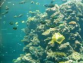 20070602~04墾丁山海戀:美麗珊瑚礁