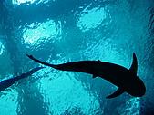20070602~04墾丁山海戀:鯊魚
