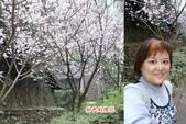 990204九族賞櫻&搭日月潭纜車:粉色的櫻花.jpg