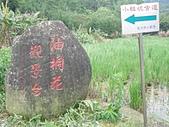 1010422龍潭小粗坑賞桐花:P4228920.JPG