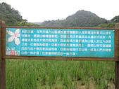 1010422龍潭小粗坑賞桐花:小粗坑古道的由來