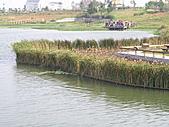 991109芭小附近的水塘戶外教學:PB092716.JPG