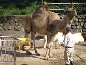 1011115好久不見~六福村:駱駝