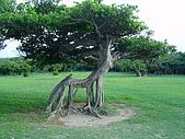 20070602~04墾丁山海戀:長得像動物的樹