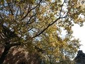 1011115好久不見~六福村:來六福村拍槭樹