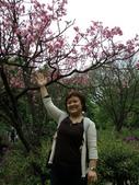 990304陽明山花季:P3043992.JPG