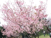 990304陽明山花季:P3043894.JPG
