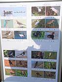 991109芭小附近的水塘戶外教學:常見的水鳥