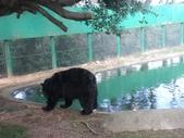 1011115好久不見~六福村:黑熊