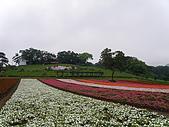 990409大溪10新竹:今天才知道非洲鳳仙花顏色真多