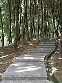 970730大溪後慈湖:肖楠之林