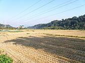 991212冬季一個人亂亂走之龍潭&石門水庫:這季節就是剛收割完畢~一片金黃