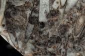 國外化石:04.jpg