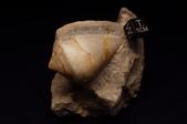 國外化石:R0002076.JPG