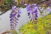 淡水紫藤咖啡園(2):IMG_6914.JPG