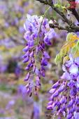 淡水紫藤咖啡園(2):IMG_6932.JPG