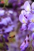 淡水紫藤咖啡園(2):IMG_6973.JPG