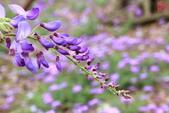 淡水紫藤咖啡園(2):IMG_6986.JPG
