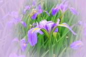 淡水紫藤咖啡園(2):IMG_7021_聚光濾鏡.jpg