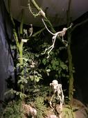 2013-02-10台南 新市 樹谷科學生活館:樹谷科學生活館 018.JPG