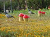 2013-02-07台南百花祭(台南公園):台南百花祭 023.JPG