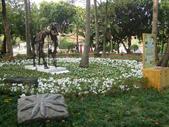 2013-02-07台南百花祭(台南公園):台南百花祭 012.JPG