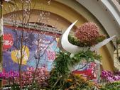 2013-02-07台南百花祭(台南公園):台南百花祭 088.JPG