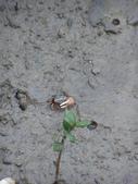 2012-02-27大鵬灣風景區:2012-02-27大鵬灣風景區 023.JPG
