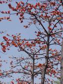 2012-03-22台南市 東豐路 木棉花:2012-03-22東豐路 木棉花 012.JPG