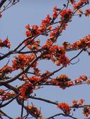 2012-03-22台南市 東豐路 木棉花:2012-03-22東豐路 木棉花 014.JPG