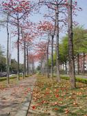 2012-03-22台南市 東豐路 木棉花:2012-03-22東豐路 木棉花 015.JPG