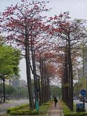 2012-03-22台南市 東豐路 木棉花:2012-03-22東豐路 木棉花 019.JPG