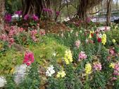 2013-02-07台南百花祭(台南公園):台南百花祭 059.JPG