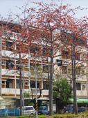 2012-03-22台南市 東豐路 木棉花:2012-03-22東豐路 木棉花 020.JPG