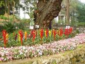 2013-02-07台南百花祭(台南公園):台南百花祭 051.JPG