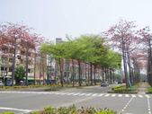 2012-03-22台南市 東豐路 木棉花:2012-03-22東豐路 木棉花 021.JPG