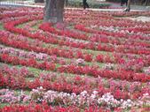 2013-02-07台南百花祭(台南公園):台南百花祭 017.JPG