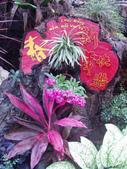 2013-02-07台南百花祭(台南公園):台南百花祭 040.JPG