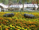 2013-02-07台南百花祭(台南公園):台南百花祭 060.JPG