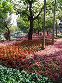 2012-02-29 2012台南百花祭:2012-02-29 2012台南百花祭 013.JPG