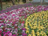 2013-02-07台南百花祭(台南公園):台南百花祭 028.JPG