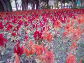 2013-02-07台南百花祭(台南公園):台南百花祭 018.JPG