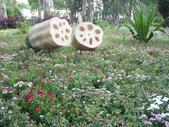 2013-02-07台南百花祭(台南公園):台南百花祭 030.JPG
